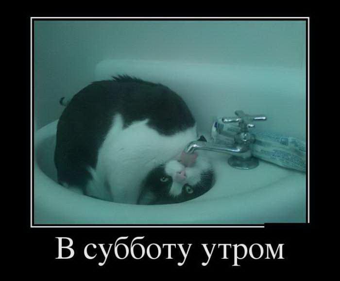 против жопы: